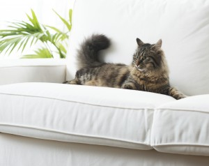 Cat Proofing Your Apartment